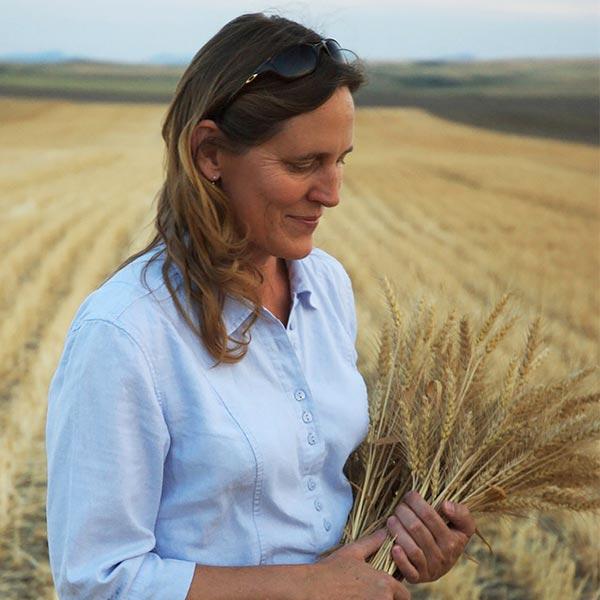 Farming wheat for great bread